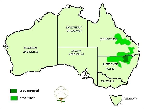 Cotone australiano